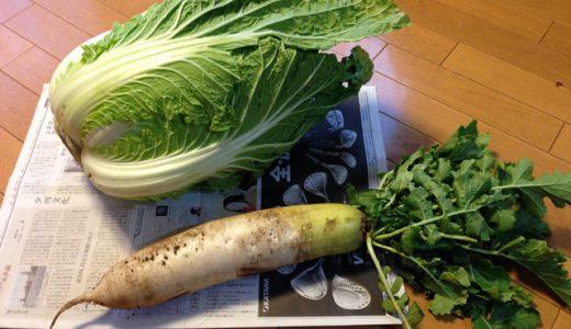 お野菜をいただきました!!